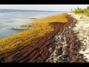 Amazing Facts of Faith — Sargasso Sea